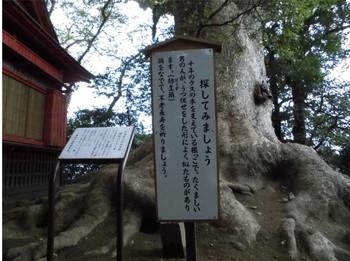 8国富町 本庄稲荷神社 ご神木の説明文.JPG