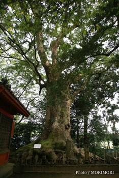 剣柄稲荷神社2.jpg