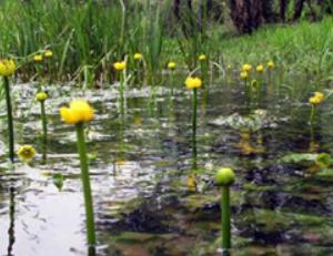 北川湿原 1.PNG