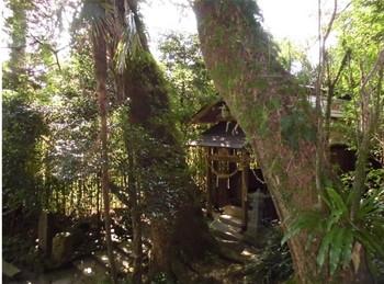 北郷町 潮嶽神社 参道階段から見た神木.JPG