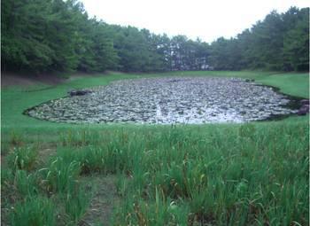 宮崎市 みそぎ池2.jpg