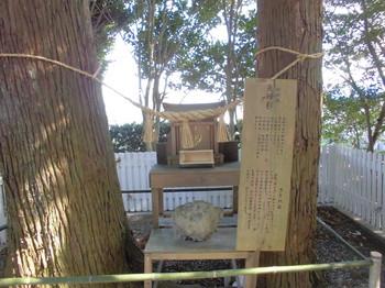 宮崎市 熊野神社 夫婦杉.JPG