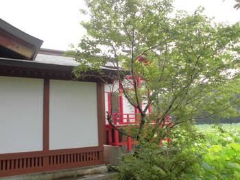 新富町10 水沼神社 ご本殿.jpg