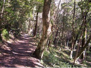 日南市 森林セラピー(猪八重渓谷)2.PNG