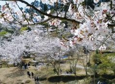 日南市 観光 竹香園2 (4月9日投稿分).PNG