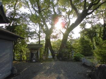 日向市 幸福神社 夫婦杉2.jpg