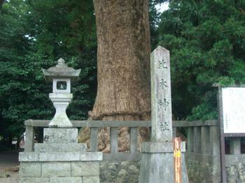 木城 比木神社 ご神木1.JPG