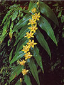都農町 植物.PNG